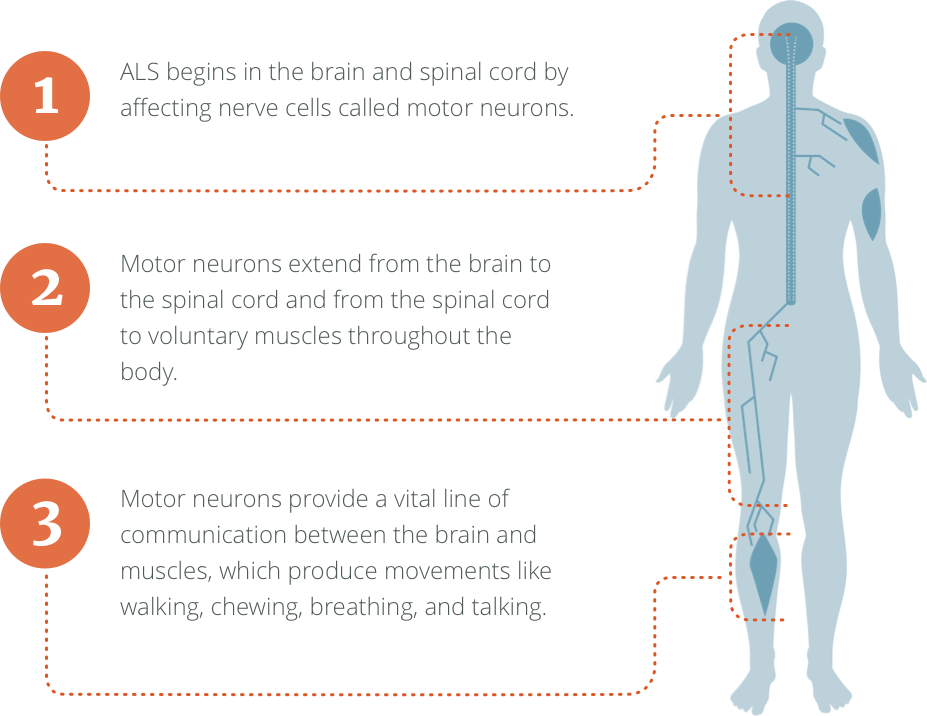 How ALS affects your body
